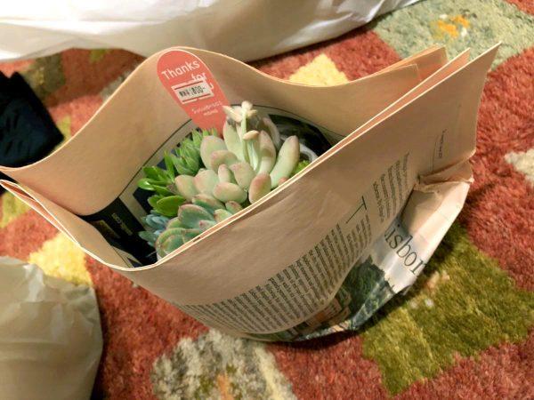 the Farm UNIVERSAL OSAKA 包装された多肉植物